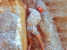 Mike McKechnie following the first pitch on the first ascent of Crack-a-Jack (17). 23 Nov 1980. Photo courtesy Mike McKechnie collection.